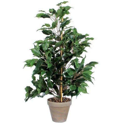 Kunstplant Ficus Exotica 65cm - Vepabins